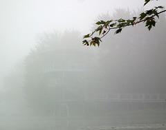 HFF friday dans la brume, in the fog