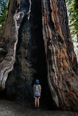 Sequoia Nat Park, Little girl