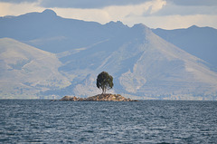 Bolivia, Titicaca Lake, A Lone Tree on the Islet