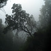 Mata da Albergaria, Rain and mist through the windshield