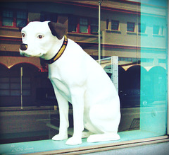 the dog in the window