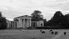 Ayot St Lawrence with sheep