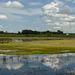 Slough near Eagle Lake