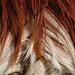 wem gehört diese Haarpracht - MUUH