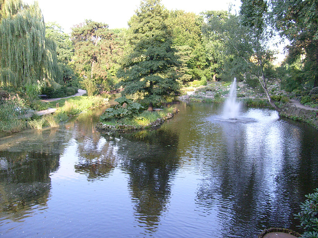 Staw - The pond