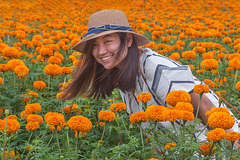 Young model in the marigold field