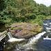 #46 - Amelia Heath - River - 26̊ 1point