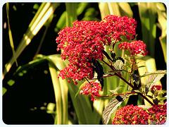 Les fleurs d'automne….
