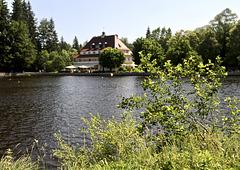 Waldsee (Moorsee)