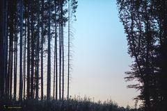 La lisière de la forêt