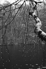 """""""Ô bruit doux de la pluie ...Pour un coeur qui s'ennuie """""""