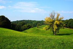 Eine alte Weide stirbt - An old willow is dying