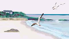 Playa de gaviotas I