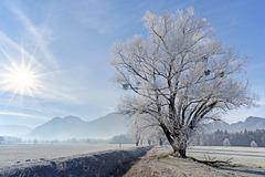 Frosty Morning (1)