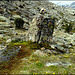 Granite with wild dwarf daffodils