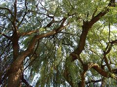Drzewa - The trees