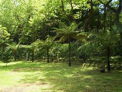 Tree ferns.