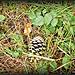 Cone in the grass