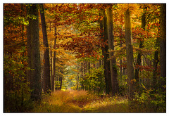 the 'golden' forest