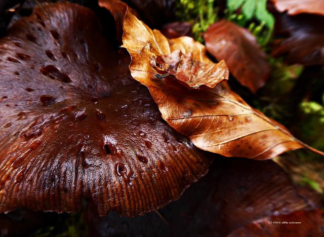 Vergänglichkeit ... Herbst [1]