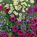Floral profusion