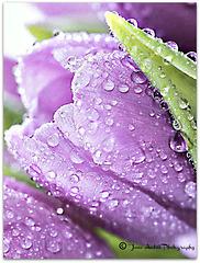 ♫ Raindrops keep falling on my head  ♫