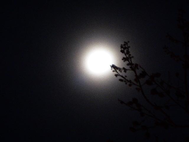La luna y la rama