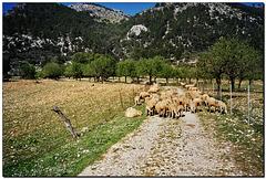 """Nur ca. 60 km zum """"Traumstrand"""" von El Arenal {;o)"""
