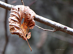 silenzio ... Herbst [2]