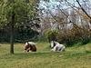 Mes tondeuses en pleine action! My mowers in action! :o)) [ON EXPLORE]