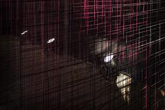 lines&lights