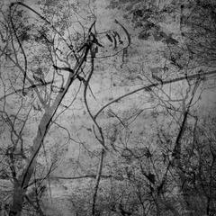 deep forest dance