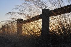 Sunrise Light-HFF