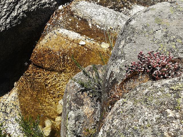 Mountain stream, granite and stonecrop