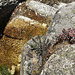 Mountain stream, granite and stonecrop