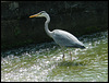 long-necked heron