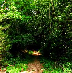1 (36)...austria jungle....green way to hell