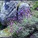 Lavender and granite