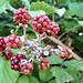 Promise of lots of blackberries