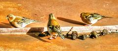 Sammeln auf dem Blechdach zum Vatertags(aus)Flug... ©UdoSm