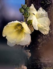 ... zwischendurch mal wieder eine Blüte ...