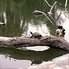 Turtle Sentry
