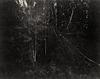 01-wald-31-07-18-sepia-scharf