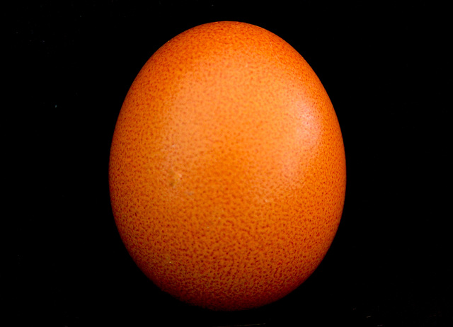 The 50-Images-Project ( 10/50 ): Proud Egg in Orange