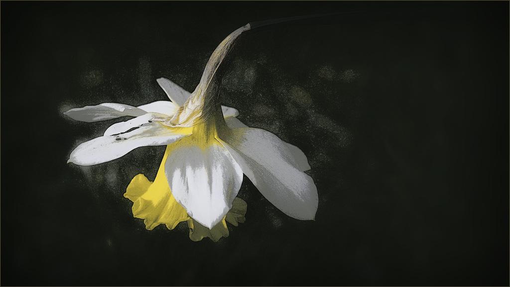 Portrait de fleurs (visions graphiques) 41212054.50fcad91.1024