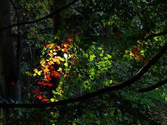 Autumnal Glimpses