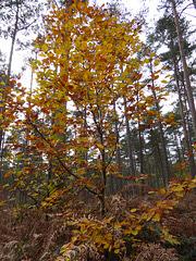 Nice Autumn colour