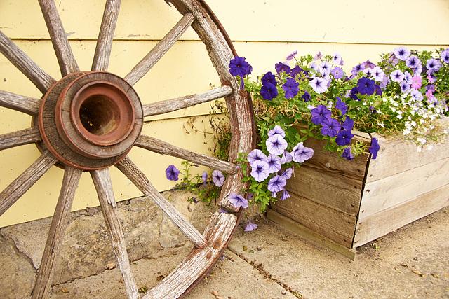 flowers n wheel