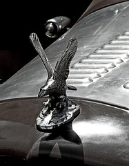 road eagle