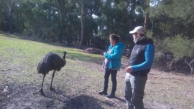 emu & admirers